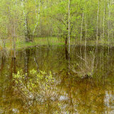 Trees and bushes are reflected in the water. From melted snow in a spring forest Royalty Free Stock Photo
