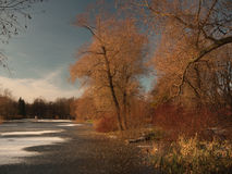 Trees and bushes on the shore of a frozen pond. stock photography