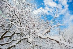 Trees and bushes in the snow. Winter background. Trees and bushes in the snow Stock Image