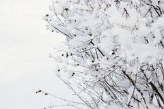 Trees and bushes in the snow. Winter background. Trees and bushes in the snow Stock Photography