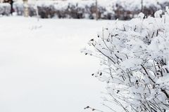 Trees and bushes in the snow. Winter background. Trees and bushes in the snow Royalty Free Stock Photography
