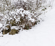 Trees And Bushes Under Snow Waiting For Spring. Covered in fresh snow with rocks Stock Photos