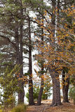 Trees in bushland Royalty Free Stock Photos