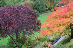 Trees in Butchart Gardens stock photography