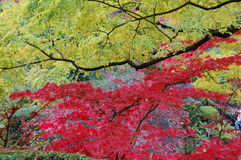 Trees in Butchart Gardens stock image
