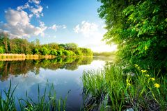 Trees by calm river Royalty Free Stock Image