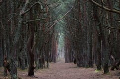 Trees canopy arching over a misty forest road Stock Photos