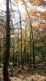 Trees canopy during autumn time stock photo