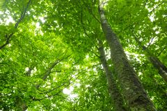 Trees canopy with leaves Royalty Free Stock Photo