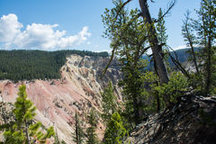 Trees and Canyon. This was a part of a large canyon system at Yellowstone National Park. The green from the vegetation made a nice contrast against the browns Royalty Free Stock Photo