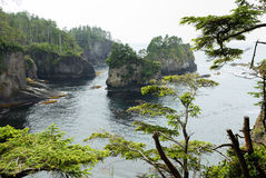 Trees at Cape Flattery Royalty Free Stock Images