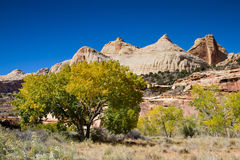 Trees in the Capitol Reef National Park Stock Photography