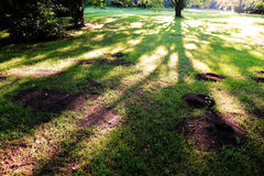Sunset in the Woods. Trees casting large shadows in the woods stock photo
