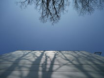 Trees casting shadow on metal facade of building Stock Image