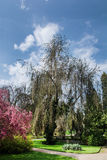 Trees in the castle garden Stock Image