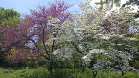 Trees in a Central Park. Trees cen central park pink white stock photos