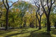 Trees in Central Park Royalty Free Stock Photos
