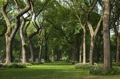 Trees in Central Park. New York City Royalty Free Stock Images
