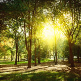 Trees in Central Park New York, NY, USA. Royalty Free Stock Photo