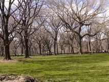 Trees in central park. In new york at summer time Stock Photo
