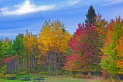 Trees changing colors during autumn. Nature landscape, Trees changing colors during autumn in a forest park with benches, rural Pennsylvania Poconos Mountains Stock Photo