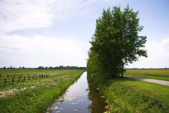 Trees by the channel at farmland Royalty Free Stock Image