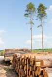Trees chopped and stacked in forest Stock Image
