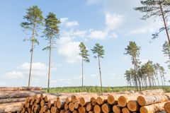 Trees chopped and stacked in forest Stock Images