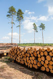 Trees chopped and stacked in forest Royalty Free Stock Images