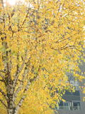 The trees of the cities in autumn brighten the greyness. View of a Zurich park in autumn with its shimmering trees stock photo