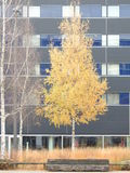 The trees of the cities in autumn brighten the greyness Stock Photos