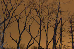 Trees with City Glow. Trees against orange sky from glow of the city lights give an ere feel stock photo