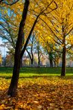 Trees of city park in golden foliage. Warm november weather stock photo