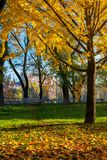 Trees of city park in golden foliage. Warm november weather royalty free stock photo