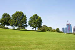 Trees on City Park Hill Stock Image