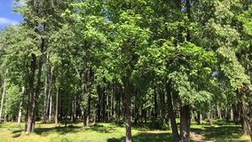 Trees in the city Park. Park is a provincial city in the summer stock footage
