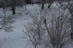 Trees in the city in the snow. Winter has come. Snow fell asleep road lies on the electric wires. Stock Photography