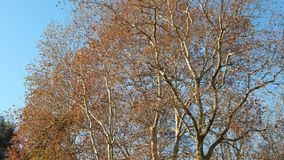 Trees in autumn Stock Photography