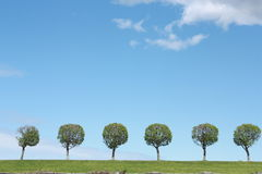 Trees with clear blue sky Stock Images