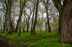 Trees in a clearing in the woods Royalty Free Stock Images