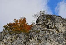 Trees on the cliff, autumn view. Colored trees on the cliff Stock Images