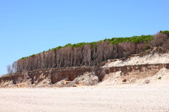 Trees on the cliff Royalty Free Stock Images