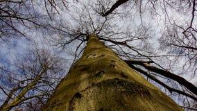 Tree a powerful pillar of the sky stock photo