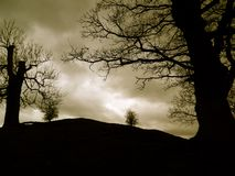 Trees cling to the hillside. Trees in silhouette on the Cumbrian hillside Royalty Free Stock Images