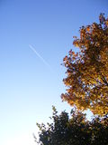 Trees. With cloudless blue sky Royalty Free Stock Photos