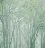 Trees in the clouds. Low cloud up high in the mountains, so fresh,cool and a feeling of being on another planet was my experience stock image