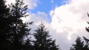 Clouds blowing in the wind. Trees and clouds blowing in the wind stock video
