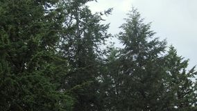 Trees blowing in the breeze. Trees and clouds blowing in the wind stock video