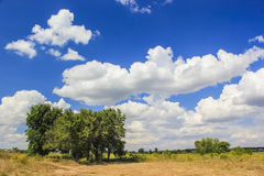 Trees and clouds Royalty Free Stock Photo