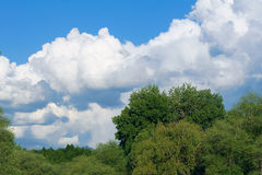 Trees and clouds Stock Photos